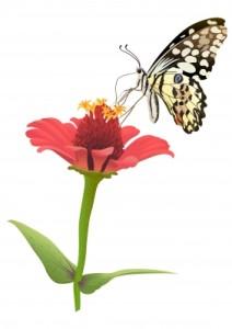 flower butterly